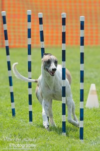 Huckleberry Hounds AAC Trials - Kelowna
